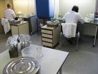 In vitro technicians at work